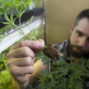 Pot Legalization across the Country May Hinge on California Vote