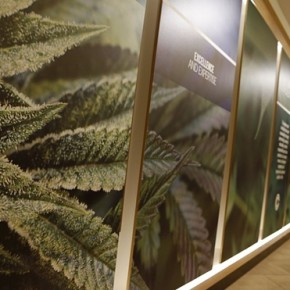First medical marijuana dispensaries open in New York