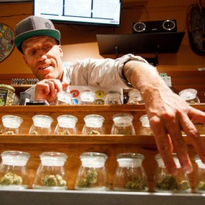 Pot use doubled as laws slackened – even before all out legalization